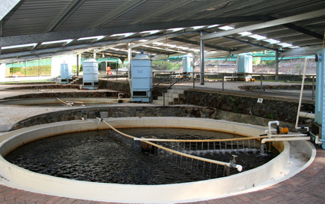 Trout hatchery ponds at the Pemberton Freshwater Research Centre