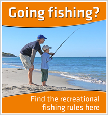 Find recreational rules here